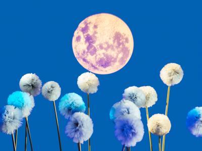 ENO Breathe Dandelions Image
